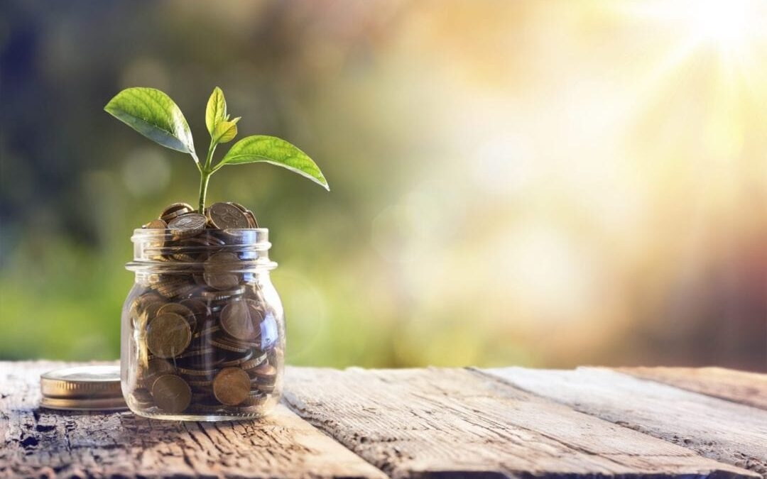 Photo of plant growing showing how you could cut digital marketing costs and grow your business with AIM Internet's access to EU Funding