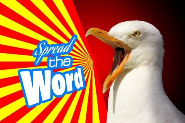 Seagull shouting spread the word | 5 irresistible ways Google remarketing benefits your business